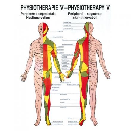 LEHRTAFEL 50 x 70 CM Physiotherapie V