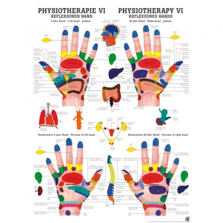 LEHRTAFEL 50 x 70 CM Physiotherapie VI