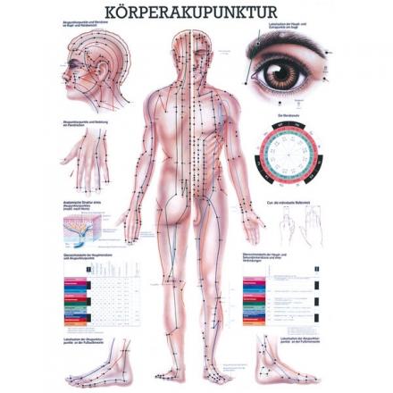 LEHRTAFEL 70 x 100 CM Körperakupunktur