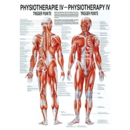 Physiotherapie IV