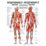 LEHRTAFEL 50 x 70 CM Physiotherapie IV