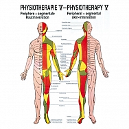 Physiotherapie V