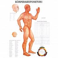 LEHRTAFEL 70 x 100 CM Körperakupunktur I
