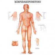 LEHRTAFEL 70 x 100 CM Körperakupunktur II